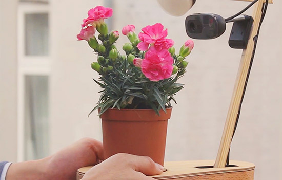 plant_post