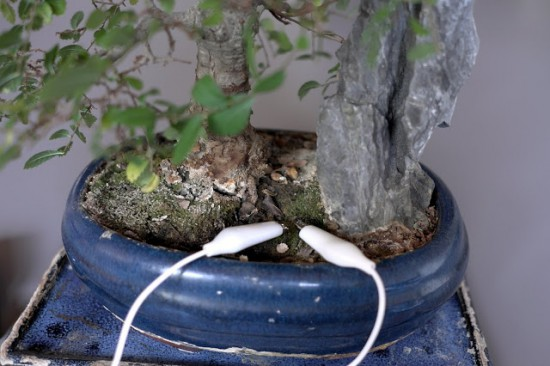 Bonsai Watchdog monitors soil moisture