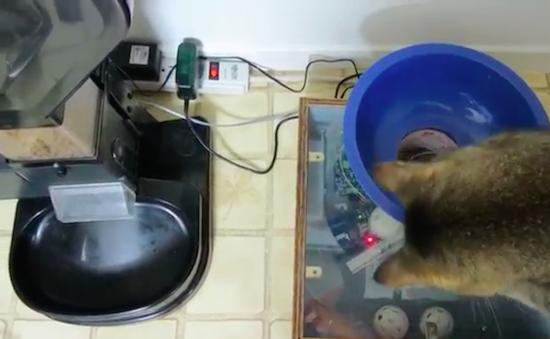 Cat Food Maker